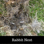 All About Nests