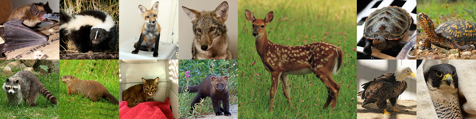 Animals of special consideration