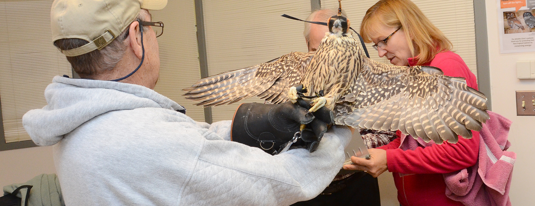 Wildlife Rehabilitator Featured