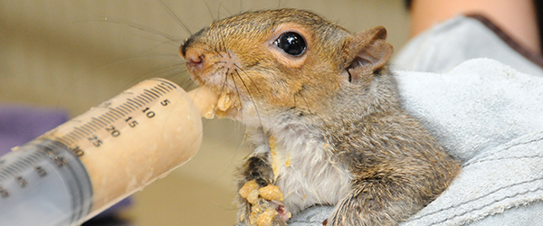 Squirrel being fed